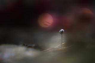 Tough little mushroom
