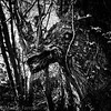 _A222499-Edit (Hyperfocalist) Tags: walk candover autumn countryside hampshire tree creature imagination animal emerging