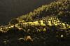 la quercia e il palo (luporosso) Tags: natura nature naturaleza naturalmente nikond500 nikonitalia imdifferent scorcio scorci country countryside alberi trees alba sunrise controluce contraluz backlight backlit landscapes paesaggio landscape paesaggi lazio italia italy sabina