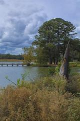 The Old Broken Tree (Thomas Vasas Photography) Tags: nature landscapes scenics travel trees bushes clouds weather lakes ponds shoreline coopercreekpark columbus georgia