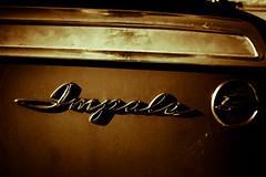 Who Can Hide My Impala (Thomas Hawk) Tags: chevrolet chevroletimpala chevyimpala dfw dallas impala oakcliff texas usa unitedstates unitedstatesofamerica auto automobile car dmudallas012011 emblem fav10