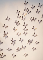 - butterfly swarm - (Jac Hardyy) Tags: butterfly butterflies swarm swarms flock insect bug bugs fly beautiful nice pretty art insects falter insekt insekten schmetterling schmetterlinge schwarm schmetterlingsschwarm schön fliegen schwärme