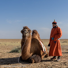 Camel herder (Julian Cook Photography) Tags: asia mongolia southgobi outdoor desert steppe costume knongorynelse camel bactriancamel animal sky