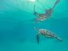 The Breach (Matt Shiffler Photography) Tags: port barton portbarton breach turtle seaturtle greenturtle oceanturtle go pro gopro underwater swimturtle animal animals philippines palawan elnido