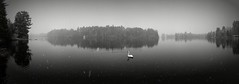 Swan on a snowy lake (yooperann) Tags: mute swan bass lake marquette county gwinn upper peninsula michigan panorama snowing grey cloudy day
