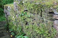 IMG_3130 (avsfan1321) Tags: connemaranationalpark connemara nationalpark ireland countygalway green lush landscape plants moss