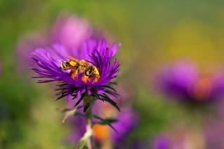 Nestled in the Bloom