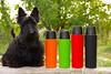 _IMG4755. 48 mm. 1-200 sec at f - 5,6. ISO 640. 0 EV (serj_borisovich) Tags: pentax dog gadgets animal thermos
