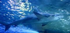 Begegnung (michaelschneider17) Tags: natur tiere haie reisen