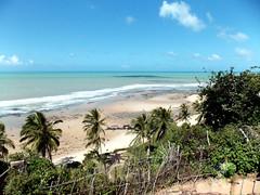 DSCN0464 - Praia de Pipa - Rio Grande do Norte - Brasil (Marcia Rosa ()) Tags: sea beach nature palm tree tropical pipa verde green marciarosa