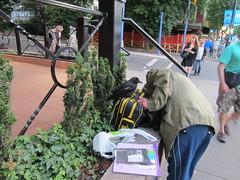 IMG_3627 Pet crow on Denman Street (vancouverbyte) Tags: vancouver vancouverbc vancouvercity