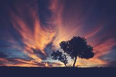 Principio del fin (una cierta mirada) Tags: landscape sky cloudscape clouds sunset tree blue orange silhouette olive outdoors land earth nature