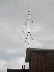 Aerial display  281/365