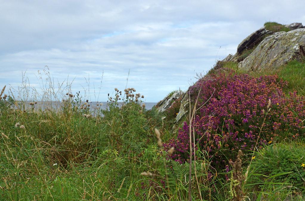 2017-08-26 09-09 Schottland 469 Cullen Bay