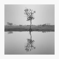 After The Rain (richieJ 11) Tags: dartmoor pond rain tree reflection mono square highkey moorland blackandwhite