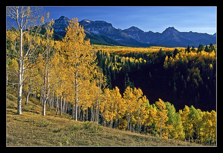 Autumn Gold in the Colorado Rockies - 1993