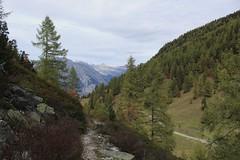 vallon d'Arby (bulbocode909) Tags: valais suisse vallondarby latzoumaz montagnes nature automne forêts arbres sentiers vert paysages