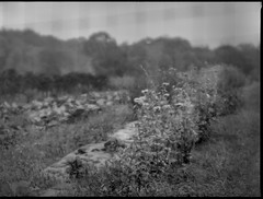through wire fencing, rows, crops, farm, Rockport, Maine, Mamiya 645 Pro, mamiya sekor 145mm f-4, Ilford FP4+, mid October 2017 (steve aimone) Tags: wirefence fence crops rows agriculture agricultural softfocus softfocuslens mamiya645pro mamiyasekor145mmf4 mamiyaprime primelens ilfordfp4 moerschecofilmdeveloper mediumformat 120 120film film monochrome monochromatic landscape blackandwhite
