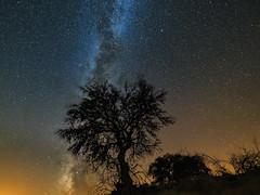 Milky way over Extremadura (Magnus_R) Tags: extremadura milkyway sommar spain spanien summer vintergatan nightscape nattlandskap stars stjärnor tree träd silhouttes silhuetter