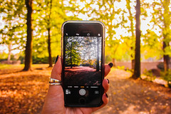 (frogghyyy) Tags: autumn exploring fall leaves tree phone canoneos1000d canonphotography artisticphoto