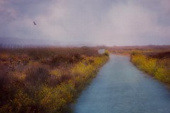 The Road Less Traveled (Christina's World aka Chrissie Bee) Tags: artistic autumn birds bird california colors dramatic exotic flowers wildflowers gold grasses impressionistic sky landscape light largebird vulture nature naturepreserve outdoors plants sandiego scenic textures usa view exoticbird yellow estuary tijuana sloughs hiking trail walk deserted exoticimage road path wildliferefuge imperialbeach
