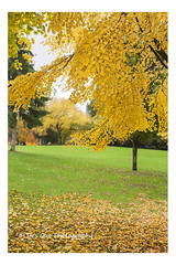 Colors of Fall (PhotoDG) Tags: colorsoffall fall season foliage leaf fallfoliage color deerlake burnaby metrovancouver autumn