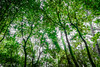 Chlorophylle/just green (harakis picture) Tags: ngc green tree forest a7 sony nice france paca