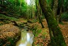 Never do things from one (Puckpics) Tags: stleonardsforest roosthole forest water watercourse autumnal rural natural ancientforest