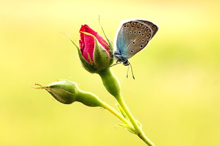 World of butterfly...