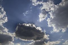 5415 (fpizarro) Tags: coruja corujaburaqueira filhote pássaro beijaflor rapinante pordosol pds céu flor orquídea azul lua branco vermelho roxo passarinho kalanchoe rosa nuvem nublado claro dia noite escuro arlivre gato cachorro planta profundidadedecampo cachosdeflores aoarlivre belohorizonte bh minasgerais mg fpizarro