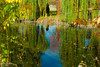 Fall 2017 (Fraser8888) Tags: fall autumn trees leaves nikon 35mm scenery bliss colors water ducks pond sky blue