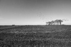 Apocalypse (Argentic Raw) Tags: apocalypse noiretblanc blackandwhite canon landscape morbihan bretagne fantastique 60d