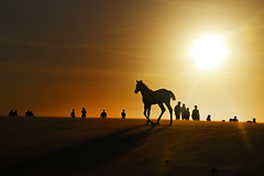 (alestaleiro) Tags: jeri sunset horse sun contraluz silouhette caballo cavalo duna dune areia arena jericoacoara ceará brasil nordeste alestaleiro