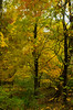 OMFD Fall Foiliage 3514 (dweible1109) Tags: omfd outmyfrontdoor nikon d5100 18135mm nikkor