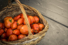 harvested tomatoes (littlefishworm1) Tags: sony nex5n vintage prime glass helios 442 58mm f2 crop sensor wicker basket tomatoes saturation less is more harsh clarity vignette tom elsie wedding 2017 hood adapted outdoors