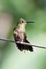 Costa-Rica-5803.jpg (ingmar_) Tags: costarica fauna gezin natuur vakantie vogel zomervakantie