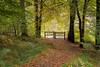 Autumn Path (jasty78) Tags: autumn path forest queenelizabethforestpark trossachs aberfoyle highlands scotland nikon d7200 sigma350mmf14