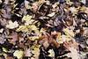 Autumn 🍂 (emilypeschka) Tags: autumn photography sunset sky tree art leaves evening herbst photografie sonnenuntergang himmel baum kunst blätter