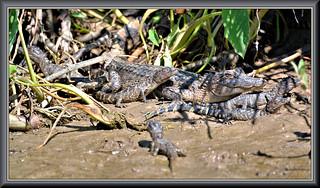 A few little lizards