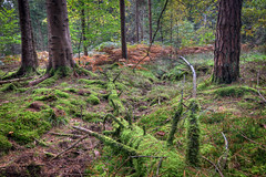 (mak_9000) Tags: woodland forest moss autumn fall trees leaves