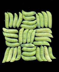 58582.01 Lupinus perennis (horticultural art) Tags: horticulturalart lupinusperennis lupinus lupine pods seedpods design basketweave 3x3 9
