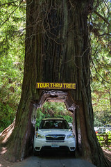 Hwy 101 CA-OR July 2018-1 (ntisocl) Tags: 2017 california californiacoast canon1dmarkiii hwy101 klamath pacificnorthwest redwoodhwy tourthrutree roadtrip roadsideattraction