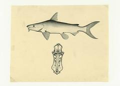 Anglų lietuvių žodynas. Žodis mantis prawn reiškia mantis krevetės lietuviškai.