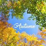 Autumn with colourful leaves thumbnail