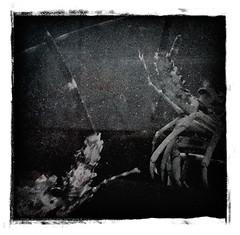Cosmic Connection (P. Correia) Tags: carlsagan lisbon 2010 lisbonne pcorreia lisboa lobsters iphone3g