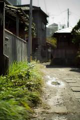 alley and weed (N.sino) Tags: m9 summilux50mm alley weed kamakura 鎌倉 住宅街 裏路地 雑草 水溜り 木造住宅