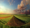 Renaissance (Katarina 2353) Tags: landscape spring sunset katarina2353 katarinastefanovic