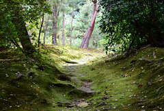 Kyoto, Japan (careth@2012) Tags: path kyoto japan scene scenery scenic view nature