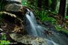 White Water Falls (Photos by Kieren Barnett) Tags: water fall waterfall green forest rocks flower wet sticks leaves nature plants nikon d7000