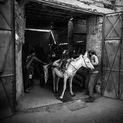 morroco-223.jpg (daviddalton) Tags: medina souk atlasmountains morocco shopping marrakech